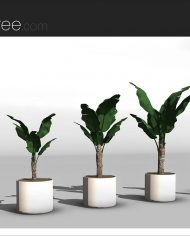 arquiplant10 – Sheet – 4 – Realistic – no edges – perspective