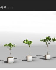 arquiplant20 – Sheet – 4 – Realistic – no edges – perspective
