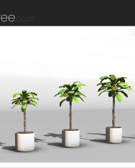 arquiplant31 – Sheet – 4 – Realistic – no edges – perspective
