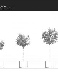 arquiplant33 – Sheet – 1 – Hidden line Elevation