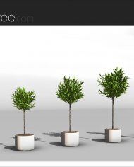arquiplant33 – Sheet – 4 – Realistic – no edges – perspective