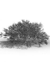 arquishrub0 – 3D View – Hidden MEDIUM