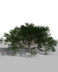 arquishrub0 – 3D View – Realistic FINE