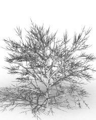 arquishrub01 – 3D View – Hidden MEDIUM