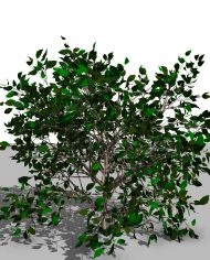arquishrub01 – 3D View – Realistic FINE