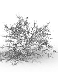 arquishrub02 – 3D View – Hidden MEDIUM
