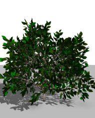arquishrub02 – 3D View – Realistic FINE