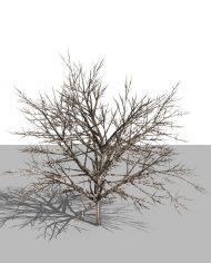 arquishrub02 – 3D View – Realistic MEDIUM
