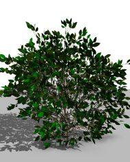arquishrub03 – 3D View – Realistic FINE