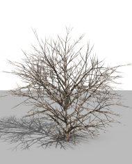 arquishrub03 – 3D View – Realistic MEDIUM