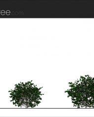 arquishrub03 – Sheet – 2 – Realistic – no edges – Elevation