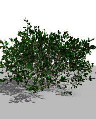 arquishrub04 – 3D View – Realistic FINE