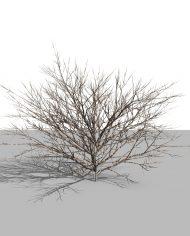 arquishrub04 – 3D View – Realistic MEDIUM