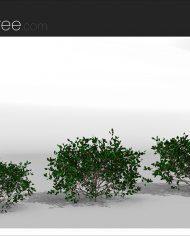 arquishrub04 – Sheet – 4 – Realistic – no edges – perspective