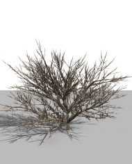 arquishrub05 – 3D View – Realistic MEDIUM