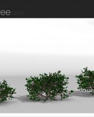 arquishrub05 – Sheet – 4 – Realistic – no edges – perspective