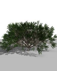 arquishrub06 – 3D View – Realistic FINE