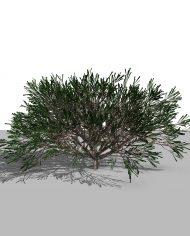 arquishrub06 – 3D View – Realistic MEDIUM