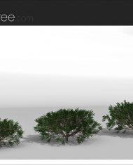 arquishrub06 – Sheet – 4 – Realistic – no edges – perspective