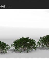 arquishrub07 – Sheet – 4 – Realistic – no edges – perspective