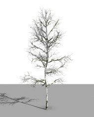 arquitree02 – 3D View – Realistic MEDIUM