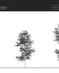 arquitree02 – Sheet – 1 – Hidden line Elevation