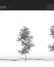 arquitree02 – Sheet – 3 – Hidden line Perspective