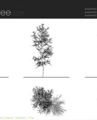 arquitree02 – Sheet – 5 – Detail Levels