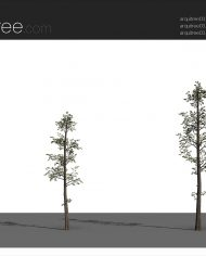 arquitree03 – Sheet – 4 – Realistic – no edges – perspective