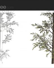 arquitree03 – Sheet – 6 – Detail Perspective