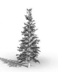 arquitree04_Detailed – 3D View – Hidden MEDIUM
