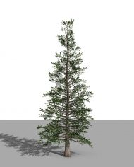 arquitree04_Detailed – 3D View – Realistic FINE