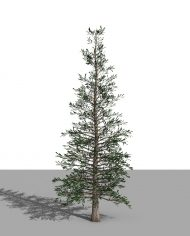 arquitree04_Detailed – 3D View – Realistic MEDIUM
