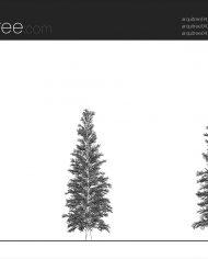 arquitree04_Detailed – Sheet – 1 – Hidden line Elevation