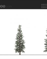 arquitree04_Detailed – Sheet – 2 – Realistic – no edges – Elevation