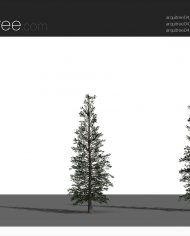 arquitree04_Detailed – Sheet – 4 – Realistic – no edges – perspective