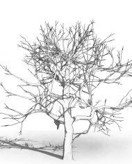 arquitree05 – 3D View – Hidden MEDIUM
