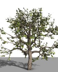 arquitree05 – 3D View – Realistic FINE