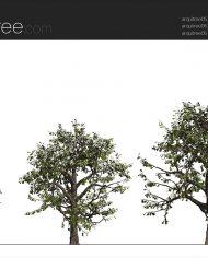 arquitree05 – Sheet – 2 – Realistic – no edges – Elevation