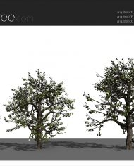 arquitree05 – Sheet – 4 – Realistic – no edges – perspective