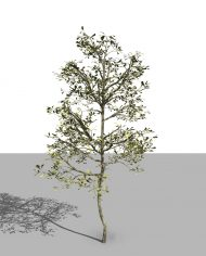 arquitree06 – 3D View – Realistic FINE