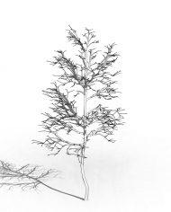 arquitree06_Detailed – 3D View – Hidden MEDIUM