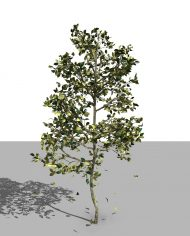 arquitree06_Detailed – 3D View – Realistic FINE