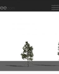 arquitree06_Detailed – Sheet – 4 – Realistic – no edges – perspective