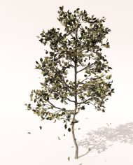 arquitree06_Detailed_Enscape