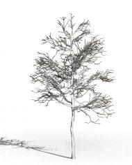 arquitree07 – 3D View – Hidden MEDIUM