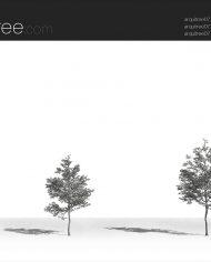 arquitree07 – Sheet – 3 – Hidden line Perspective