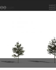 arquitree07 – Sheet – 4 – Realistic – no edges – perspective