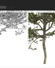 arquitree07 – Sheet – 6 – Detail Perspective
