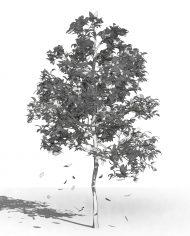 arquitree07_Detailed – 3D View – Hidden FINE